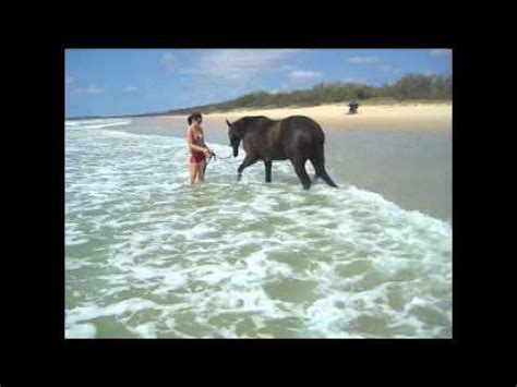 My horses on the beach playing in the water - YouTube